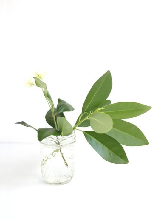 yard_flower_greens